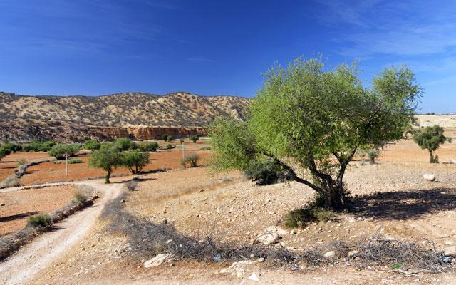 Arganovo drevo - Arganija - Argania spinosa